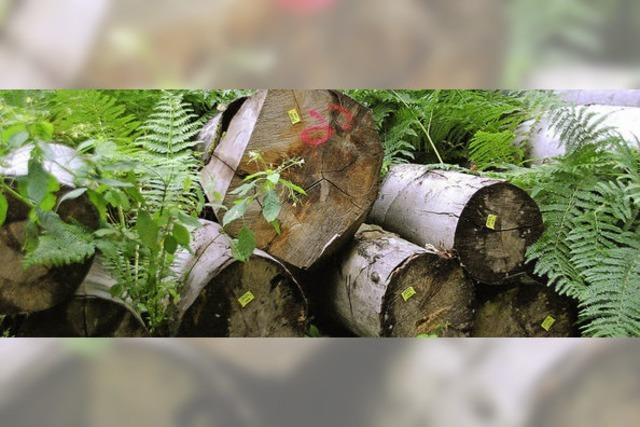 Der Wald muss sich wieder erholen