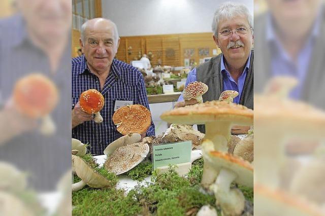 Die ganze Vielfalt heimischer Pilze