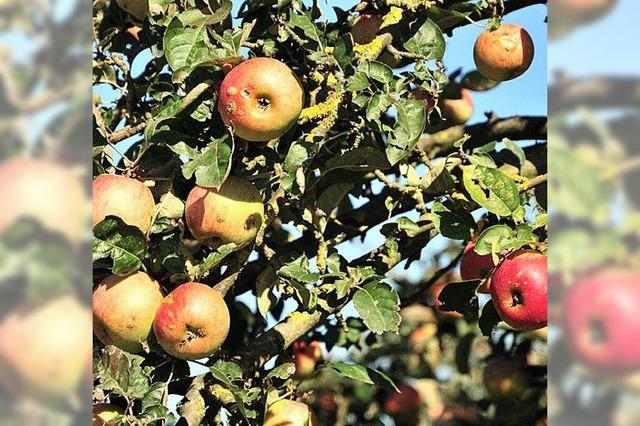 Alte Apfelsorten, seltene Apfelsorten