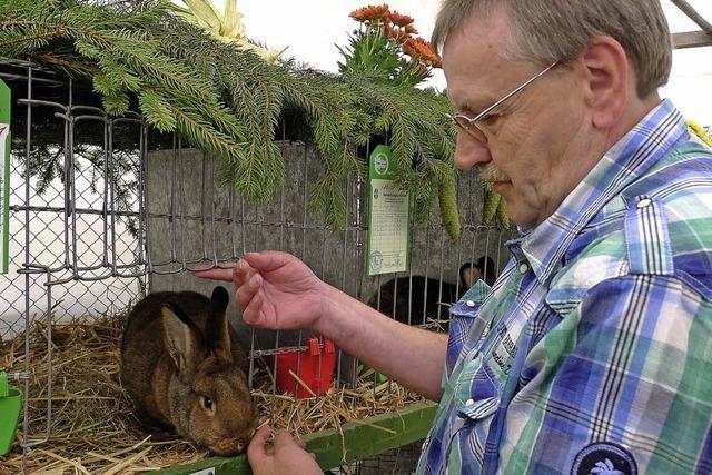 Die schönsten Kaninchen der Wälderstadt