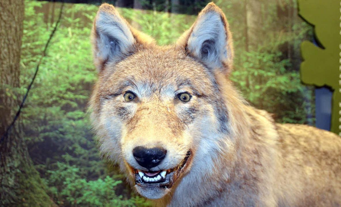 Sehen wie ein Wolf: Das vermittelt den...ine Experimentierstation im Waldhaus.     Foto: Markus Boetzer