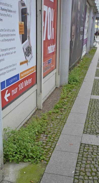 Das ehemalige Kaufhausgebäude wächst zu und stinken tut's auch.  | Foto: Sylvia-Karina  Jahn