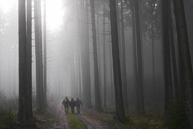 Waldinventur: Weißt du, wie viel Bäume stehen?