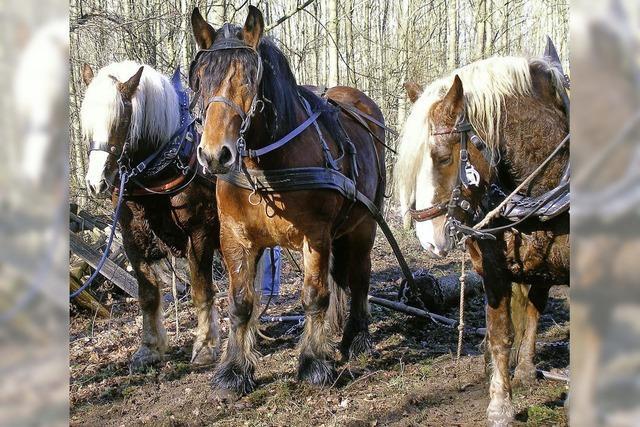 Wiehernde Waldarbeiter