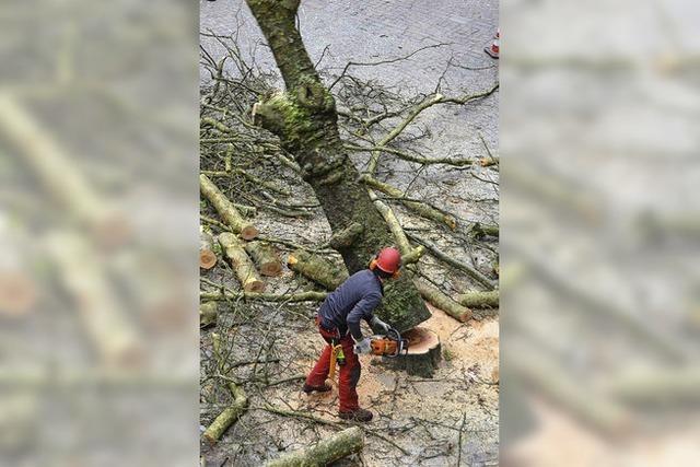 Viele Bäume müssen weichen