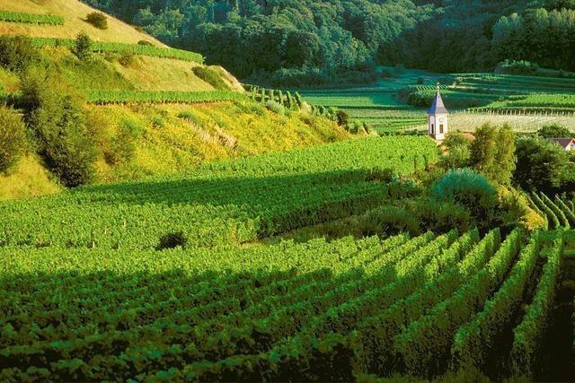 Wie das Terroir den Geschmack des Weins bestimmt