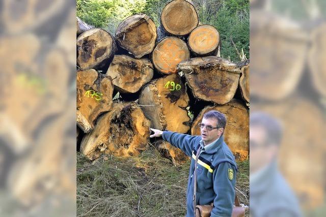 Mehr Laub soll in die Forstreviere