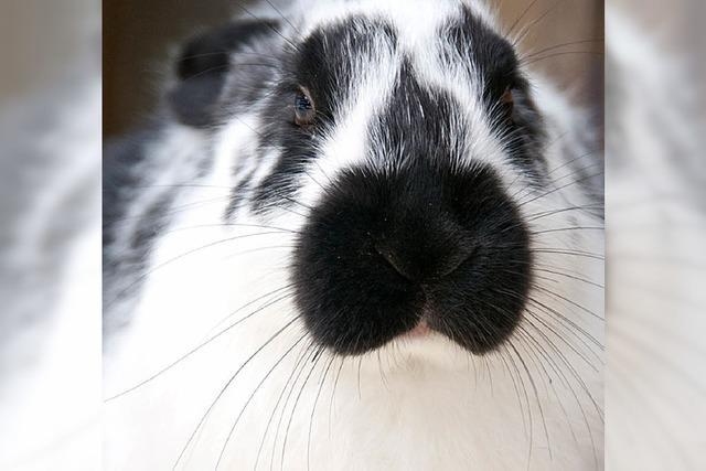 Kaninchenzüchter dringend gesucht