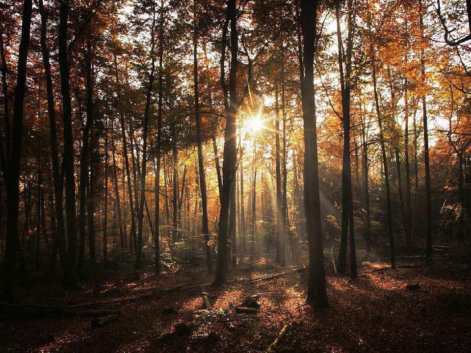 Sinnbild der Ursprünglichkeit  –...: der   deutsche Wald als Urlaubsziel   | Foto: dpa