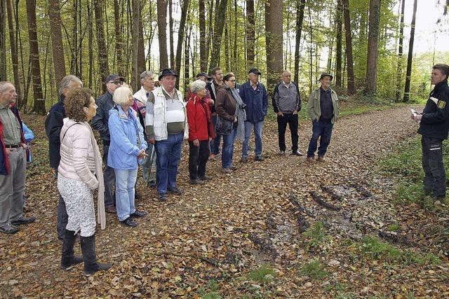Brombachs Wald in gutem Zustand