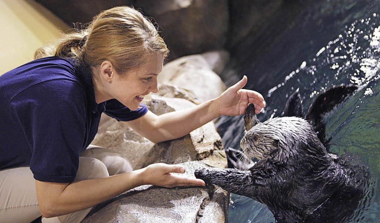 Feuchter Pfotendruck: Hunderte Mitarbe...um Tiere im riesigen Georgia Aquarium.  | Foto: Christian Schreiber