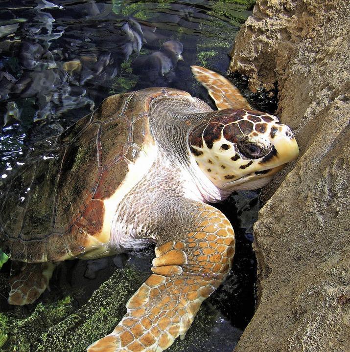 Spendenaufruf: Bei Schildkröten werden die Besucher schwach.  | Foto: Christian Schreiber