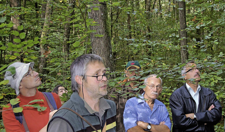 Revierförster Rainer Dickele kann vor ...dem Holzener Wald bestens vermarkten.   | Foto: Archivfoto: Sperl