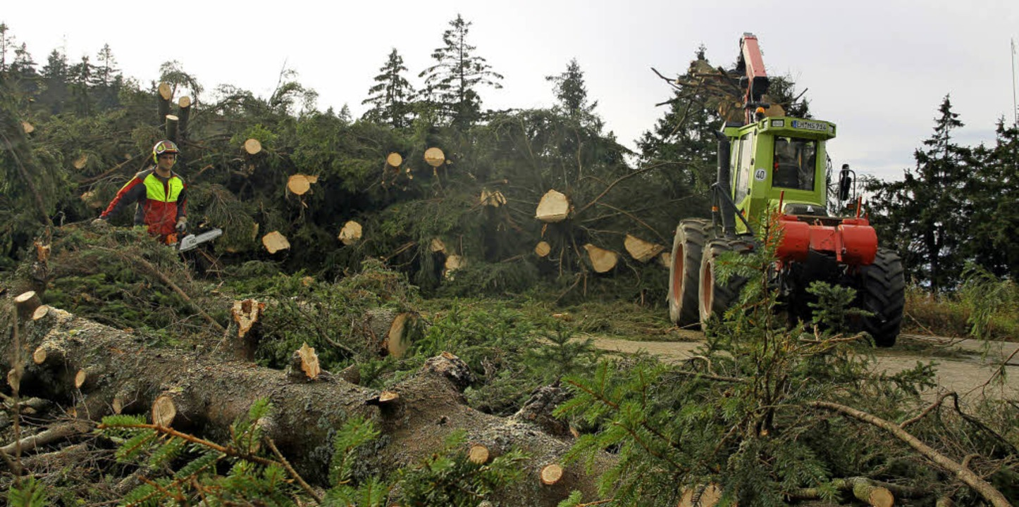 Viele Bäume, aber hier soll kein neuer...stehen: Forstarbeiter bei der Arbeit.   | Foto: Stadt Waldkirch