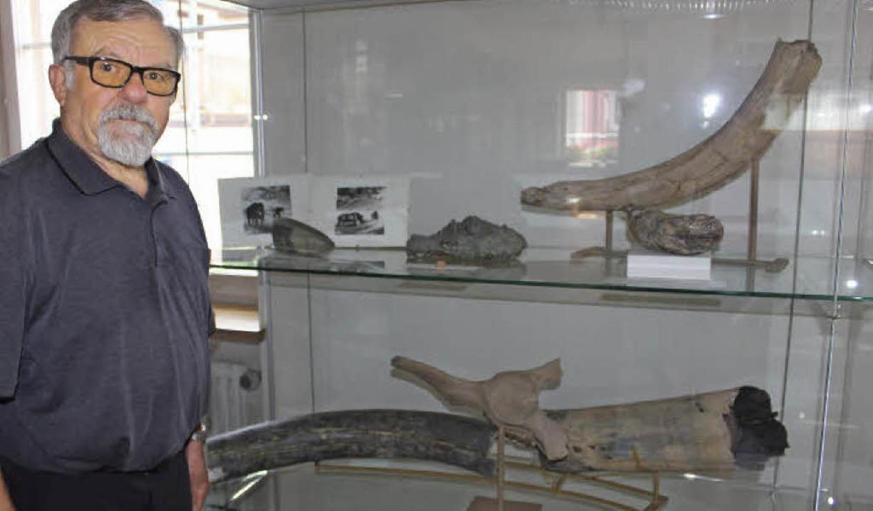 Ein wohl 40 000 Jahre alter  Mammutzah...gut erhaltene Relikt aus der Eiszeit.   | Foto: Christa Maier