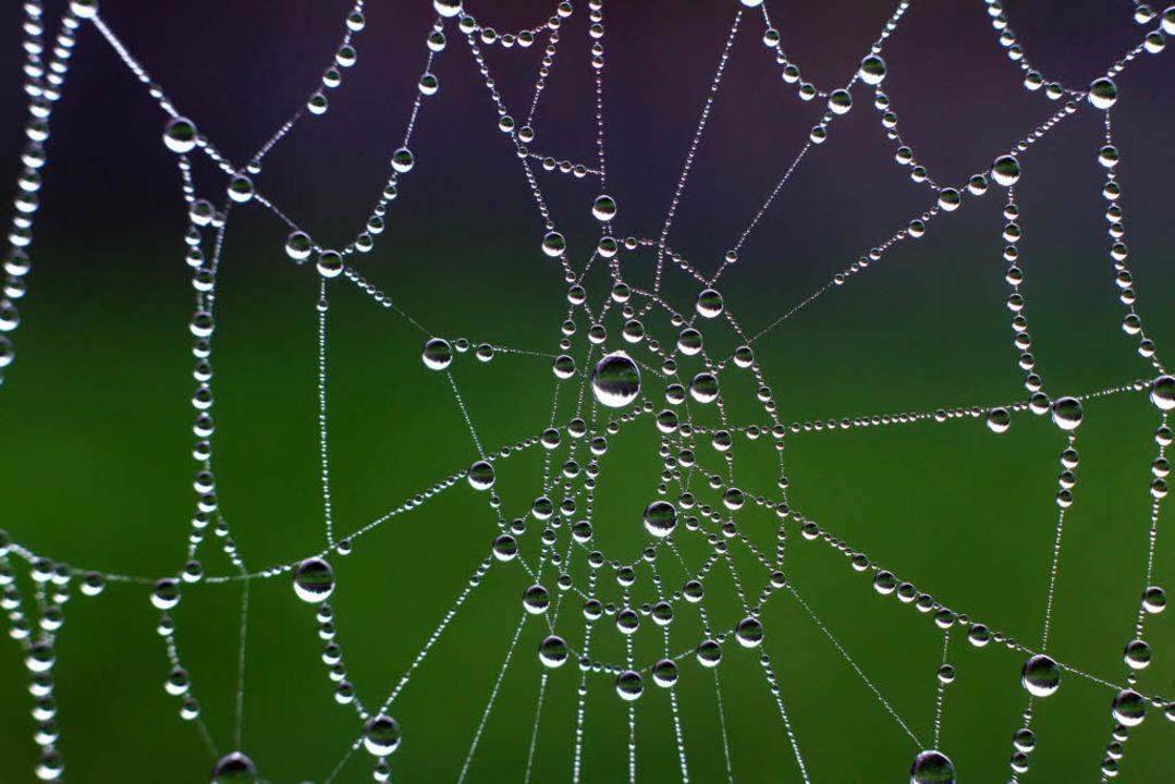 Spinnen mögen gruselig sein – schöne Fäden können viele von ihnen spinnen.    Foto: dpa