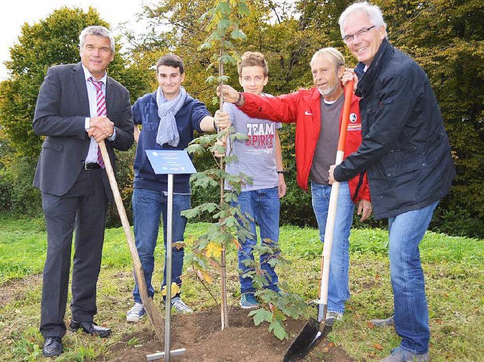 Im September wurden die Bäume auf dem Plateau des Schönbergs gepflanzt.    Foto: privat