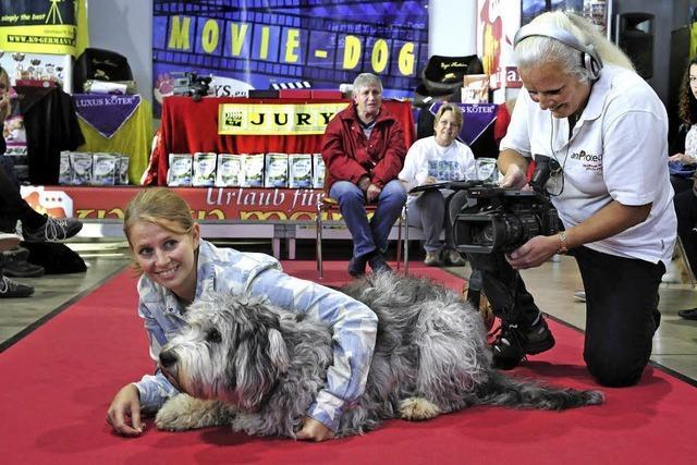 Von Rettungs- und Handtaschenhunden