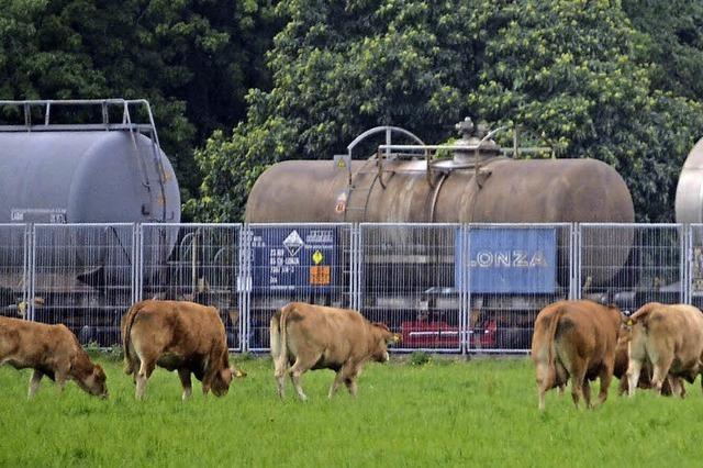 Biogasanlage von Energiedienst befindet sich noch immer in Vorbereitungsphase