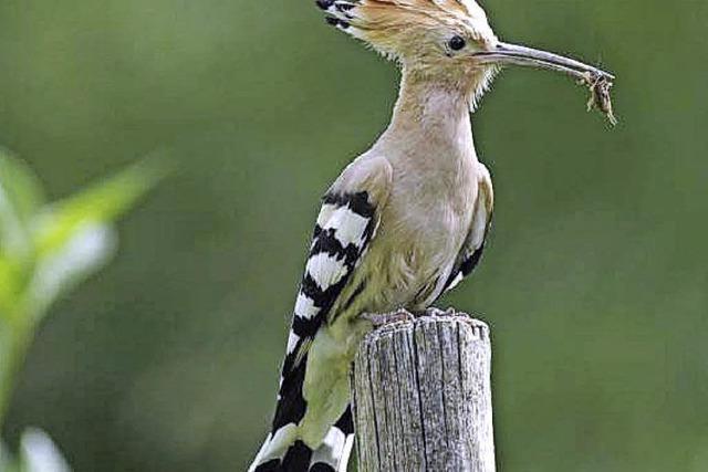 Vielfältige Vogelwelt
