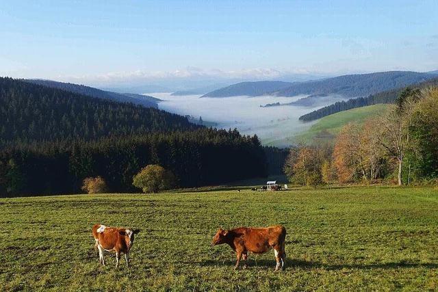 Der Oktober im Hochschwarzwald war der wärmste seit Jahrzehnten