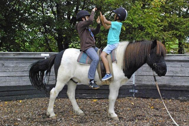 Ein Pferd für unbeschwerte Momente