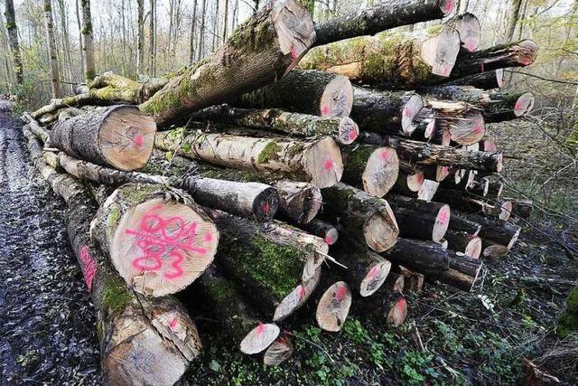 1000 Bäume im Mooswald müssen gefällt werden
