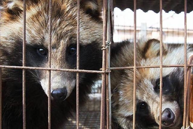 Missstände in Pelzfarmen – Tierquälerei für maximalen Profit