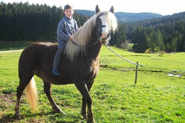 Bei vielen Martinsumzügen ist kein Pferd mit dabei