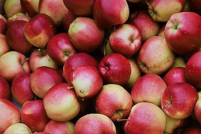 In Oberkirch werden Äpfel per Infrarot durchleuchtet