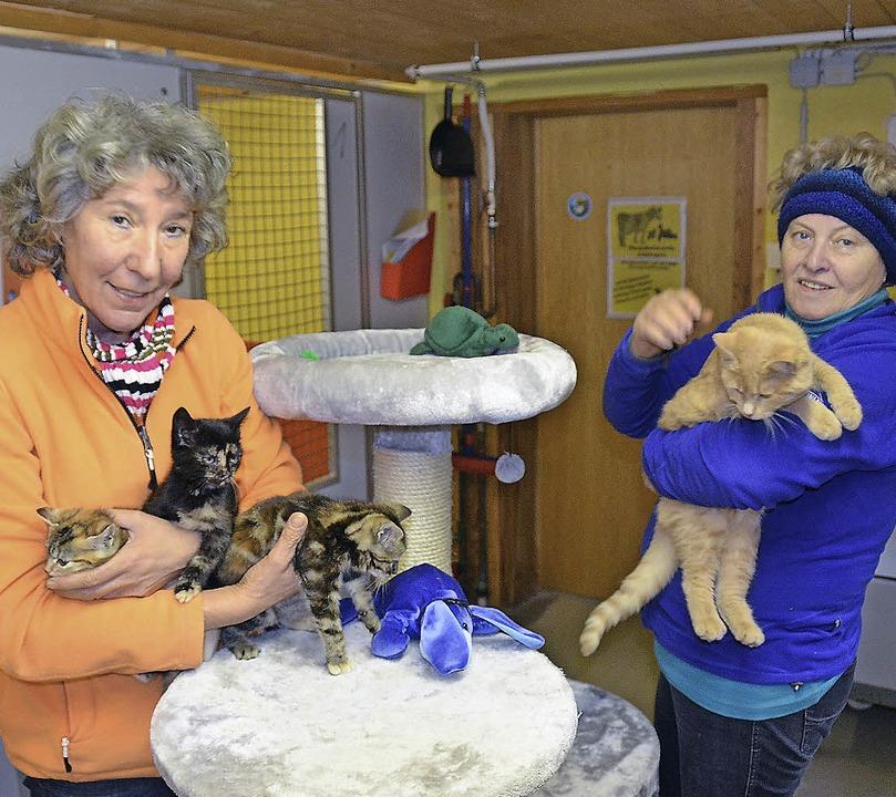 Lucia Heiler (links) und die Vorsitzen..., die im Tierheim untergebracht sind.   | Foto: Martin Wunderle