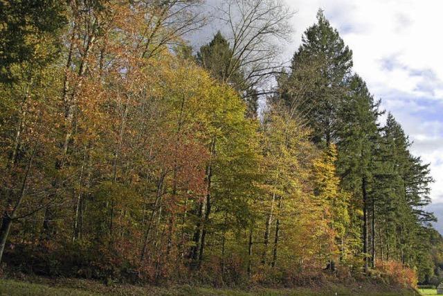 Der Wald bringt Gewinn