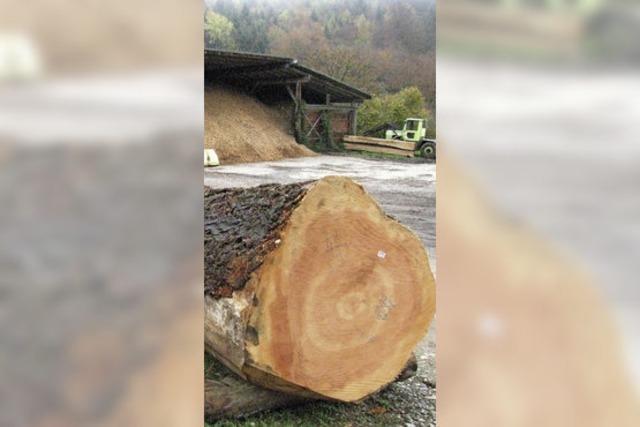 Douglasien-Stammholz ist heiß begehrt