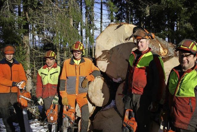 Gut 700.000 Euro aus dem Stadtwald - Gemeinderat verabschiedet Forsthaushalt