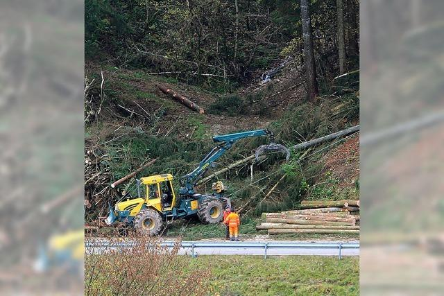 Forstarbeiten an der Kreisstraße