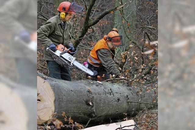 Sorge um Wald trotz Gewinn
