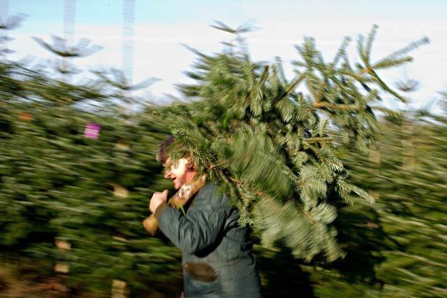 Wie weit geht das Weihnachtsbaumverbot in Schulen?