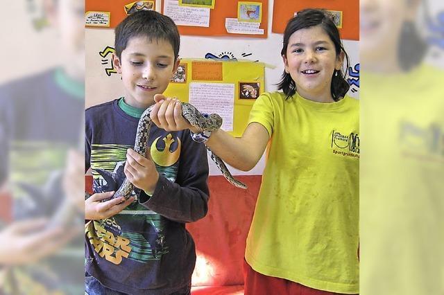 In der FT-Sportgrundschule leben zwei Schlangen