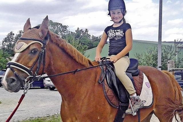 Wie man ein Pferd für sich gewinnt
