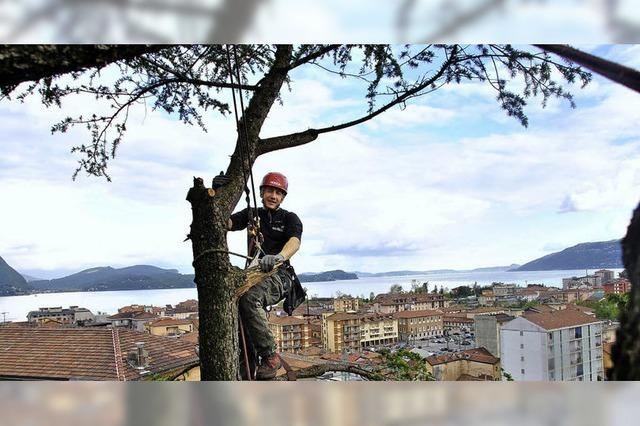 Von Berufs wegen den Baum hoch