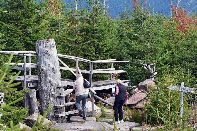 Positive Ein-Jahres-Bilanz des Nationalparks Schwarzwald