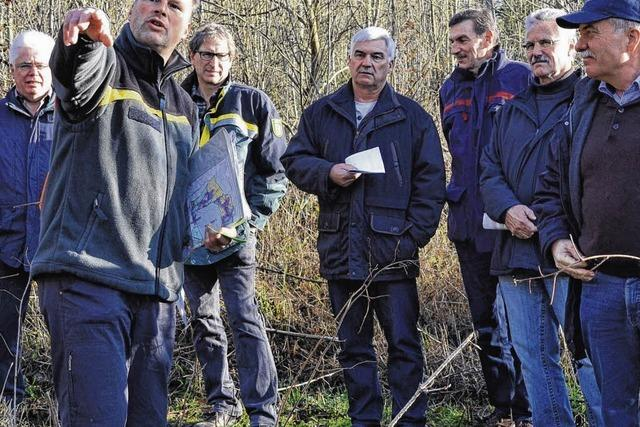 Eschensterben bereitet große Sorgen
