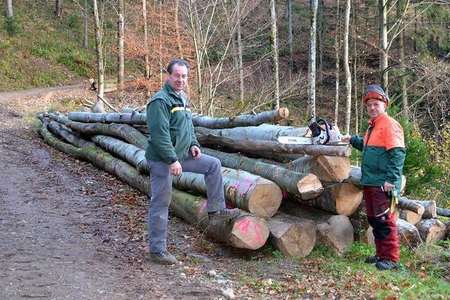 Guter Gewinn im Gemeindewald