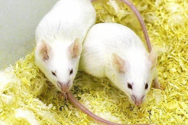 Zahl der Tierversuche erstmals seit zehn Jahren gesunken