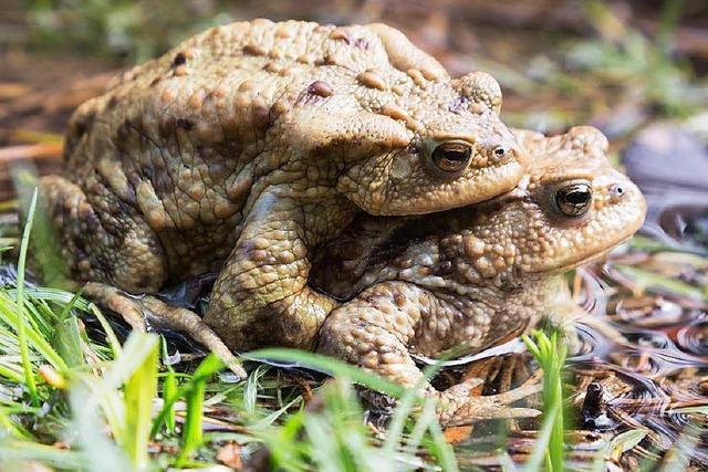 Wie wird man die Erdkröten im Naturbad wieder los?