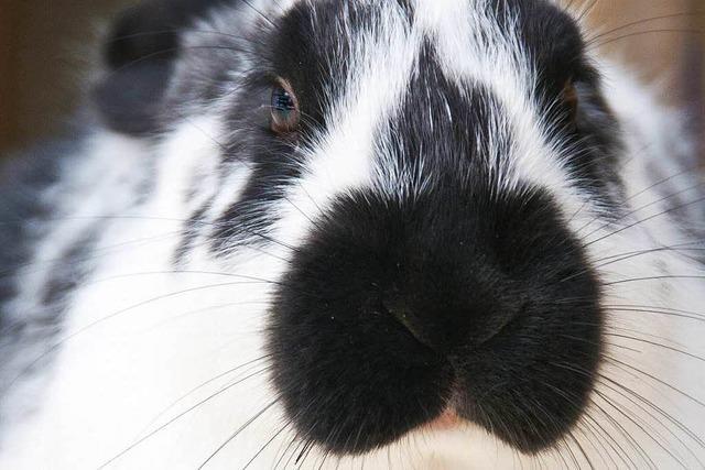 Hüpfender Stoffbeutel: Bankangestellte finden Kaninchen