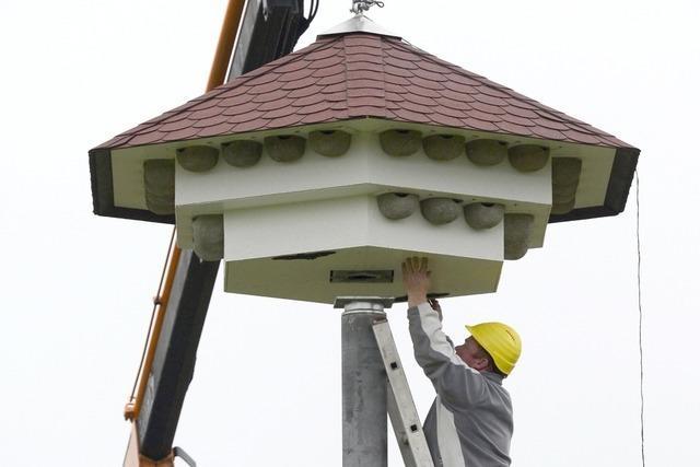 Schwalben kriegen ein XXL-Vogelhaus in Freiburg-Rieselfeld