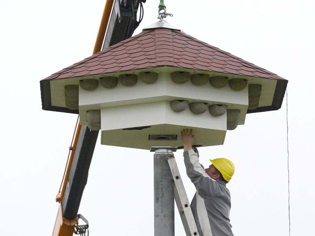 schwalben kriegen ein xxl vogelhaus in freiburg rieselfeld freiburg s dwest badische zeitung. Black Bedroom Furniture Sets. Home Design Ideas