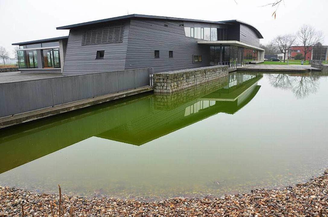 Grünlich schimmert der Teich vor dem K... Grund: Zu viele Algen sind im Wasser.  | Foto: Max schuler
