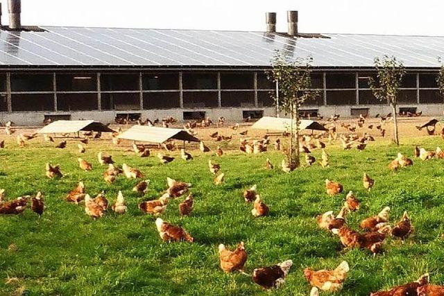 Die Hühner müssen drinnen bleiben